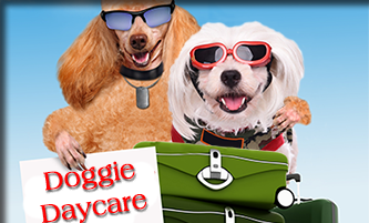 Daycare for your Dog